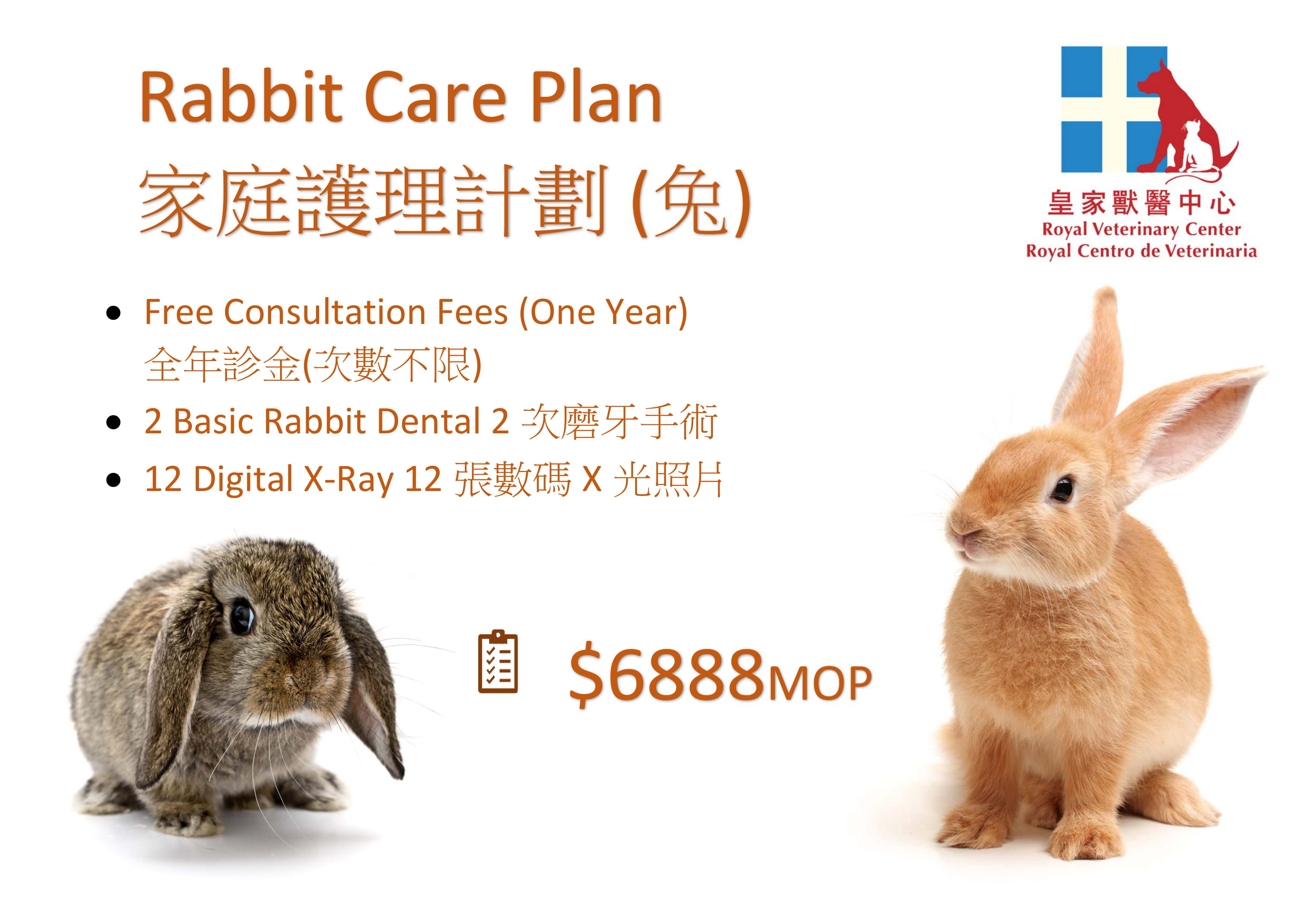 Rabbit Care Plan-1
